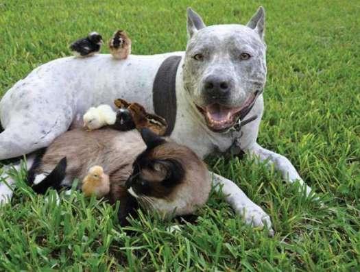 Биокорректоры для здоровья животных
