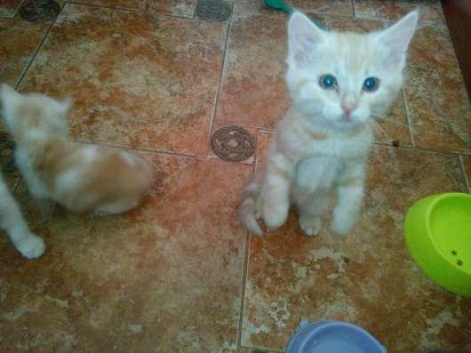 Отдам даром Рыженький котенок в добрые руки