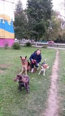 Выгул собак в Раменское Фото 1
