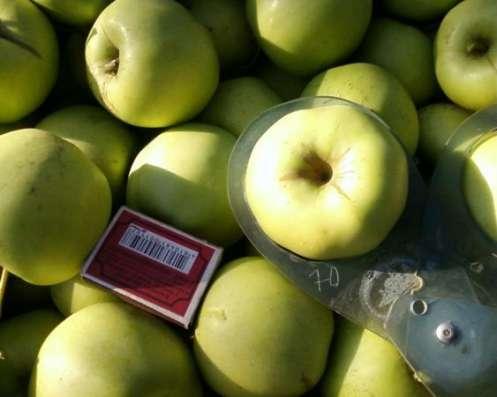 Плодоносящий яблоневый сад в Крыму