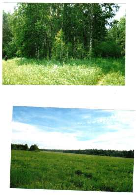 Продам земли сельхоз, назначения 32 га в полевском районе в Екатеринбурге Фото 2