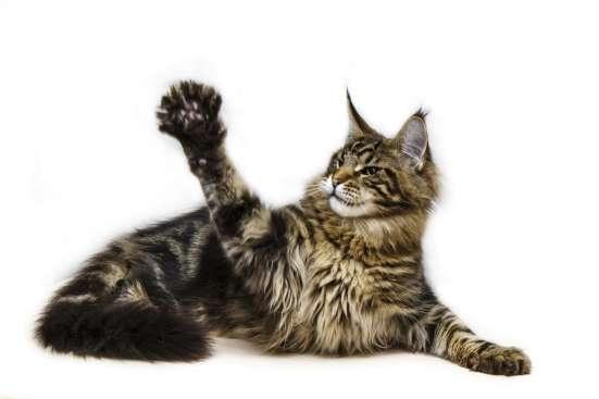 Кот для победителя